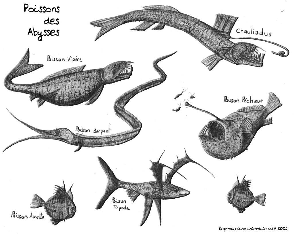 Croquis - Croquis poisson ...
